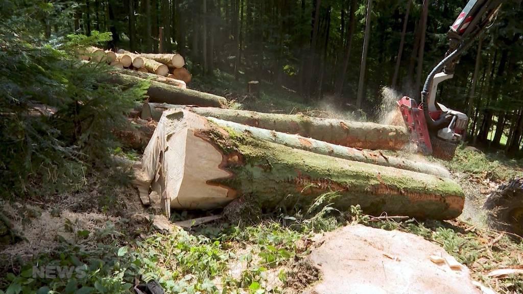 200 Bäume pro Tag: Borkenkäfer zerstören Emmentaler Wälder