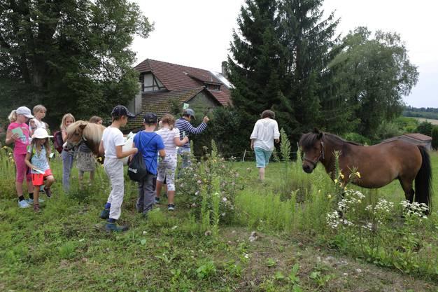 Auf dem Spaziergang werden die Kinder von Ponys überrascht