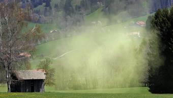 Die Pollen fliegen 2014 zwei Wochen früher.