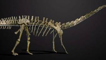 Star der Evolutions-Auktion: Skelett eines Diplodocus (Archiv)