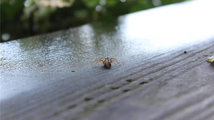 Spinnen gibt es auf der Holzbrücke zuhauf.