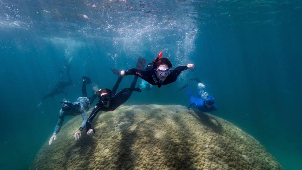 Gut 400 Jahre alt: Gewaltige Koralle im Great Barrier Reef entdeckt