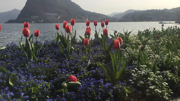 Eine solche Blütenvielfalt wie hier im Parco Ciani ist nicht in allen Luganeser Pärken zu finden. Die Stadt will nun 4,3 Millionen Franken in die Hand nehmen, um die zehn Grünflächen der Stadt zu erneuern.