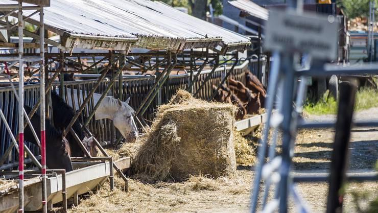 Pferde auf dem Hof von Ulrich Kesselring, der wegen der Quaelerei von Pferden unter Verdacht steht, am Montag 7. August 2017, in Hefenhofen. (KEYSTONE/Christian Merz)