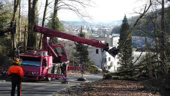So wurden die Bäume an der Kennelgasse in Baden abgesägt