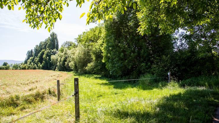 Pflanzenschutzmittel verschmutzen den stark zugewachsenen Weierbach.