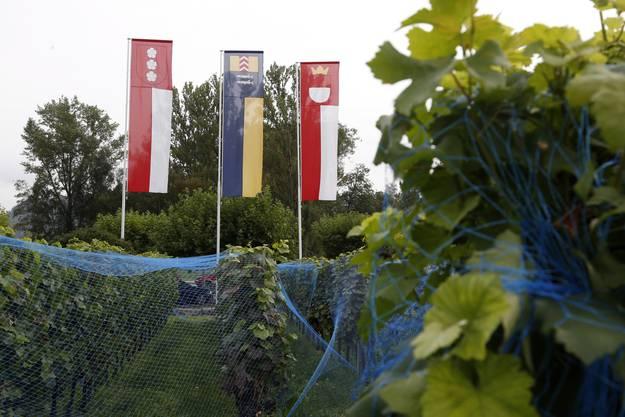 Die Fahnen verweisen auf Solothurner Rebbesitz