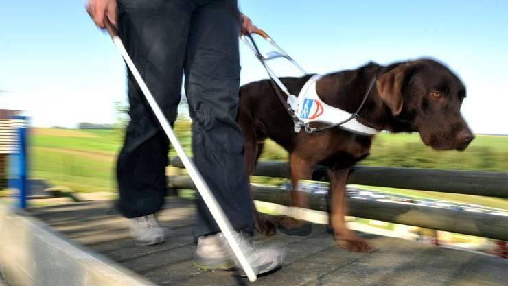 Als Blindenhunde helfen die Vierbeiner dem Menschen schon gewaltig. Sollen sie nun auch das Kolumnen-Schreiben übernehmen?