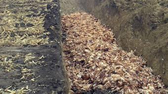 Tausende gekeulte Hühner einer Farm im Nordwesten des US-Bundesstaates Iowa werden hier entsorgt