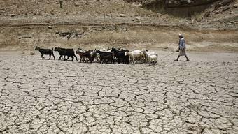 In Mauretanien werden Nachkommen von Sklaven noch immer gezwungen, Frondienst zu leisten, etwa als Viehhirten. (Symbolbild)