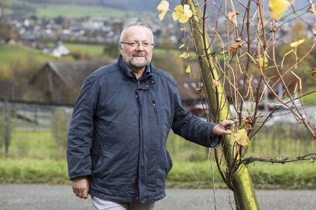 Peter Rey, Aargauer Rebbaukommissär, geht nach 34 Amtsjahren in Pension. Aufgenommen in Frick am 8. November 2017.