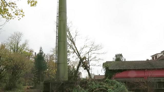 Baum fällt! So wird an der Emme in Deitigen/Biberist gerodet