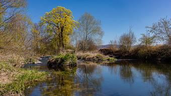 Der Verein Permakulturgärten Grüner Zweig bezweckt die Förderung der Permakultur im Laufental und Schwarzbubenland.