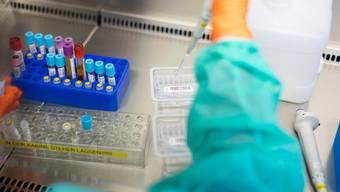 Das Immunsystem des Patienten wurden nach einer Stammzellenspende neu aufgebaut.