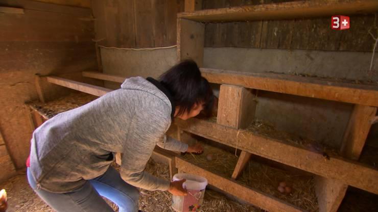 Auch im Hühnerstall findet sie alle Eier.