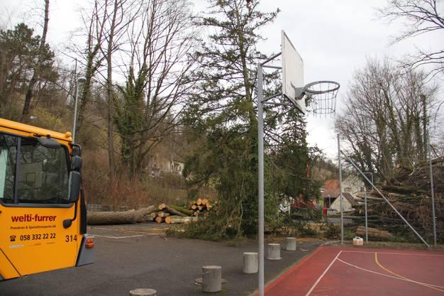 Beim Sportplatz wird das Holz aussortiert.