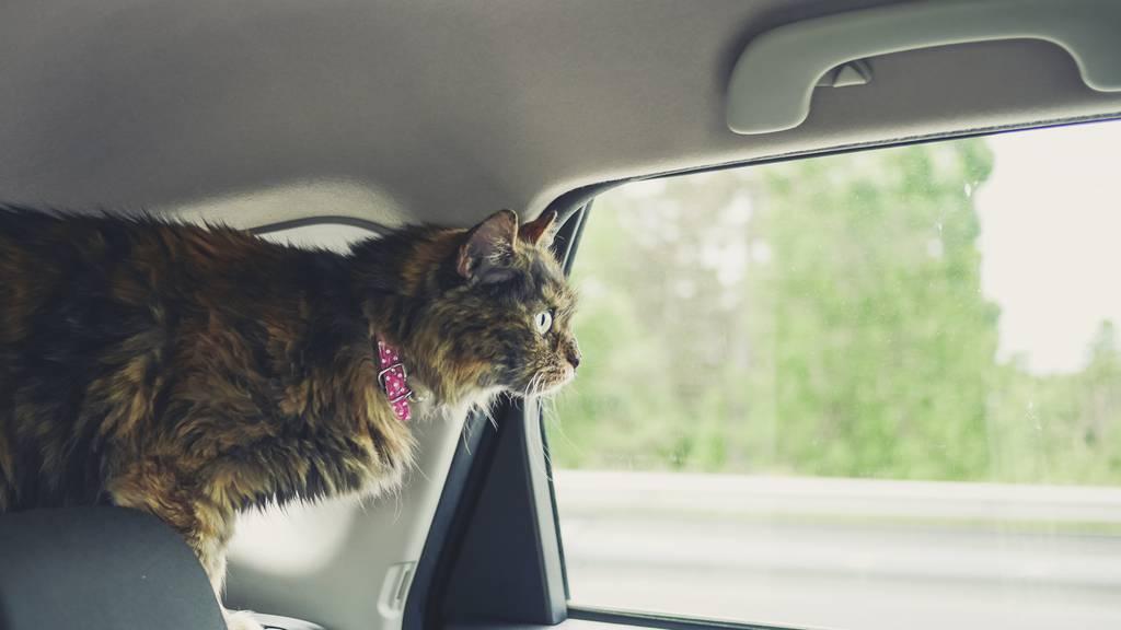 Wer hat schon mal seine Katze im Auto vergessen?