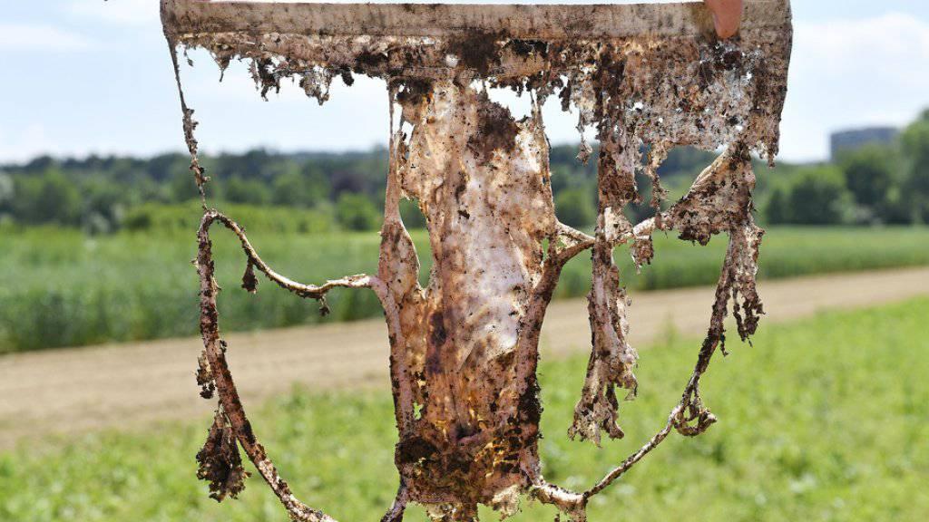 Unterhose, die zwei Monate unter der Erde war, auf dem Gelände von Agroscope in Zürich am Mittwoch.