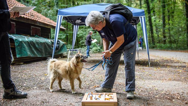 Hundeplauschturnier des Wohnheims Kontiki in Subingen