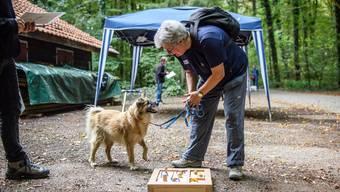 Hundeplauschturnier vom Wohnheim Kontiki in Subingen