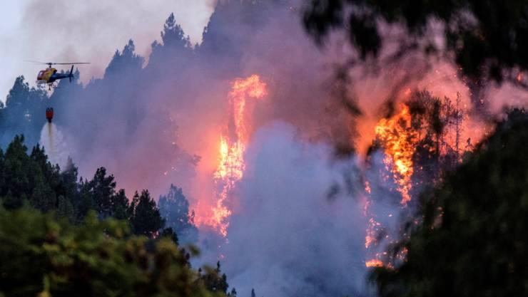 Er will den Regenwald zwar nicht abbrennen, dafür aber abholzen: US-Präsident Donald Trump.