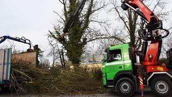 Die gefällten Bäume werden zu Holzschnitzeln weiterverarbeitet.