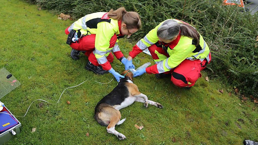 Hund aus verrauchter Wohnung in Steinhausen ZG gerettet