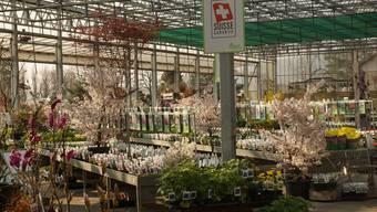 Im Gartencenter Zulauf ist der Frühling die schönste und die strengste Zeit im Jahr.