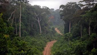 Regenwald in Guinea: Vor allem die jüngere Generation setzt sich für den Erhalt ein.
