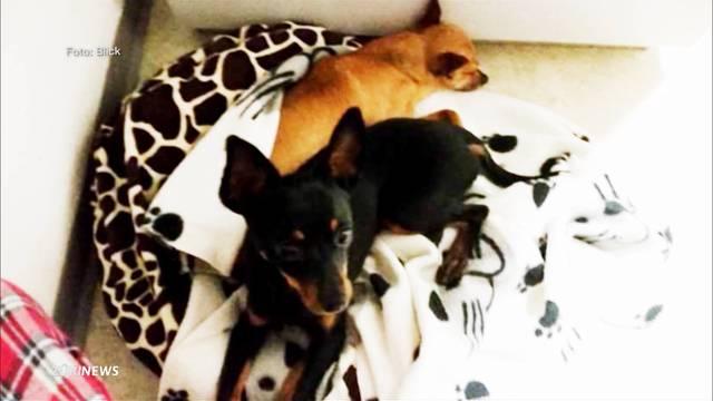 Hundeertränker vor Gericht