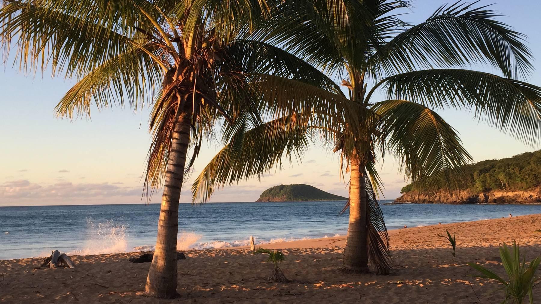 Guadeloupe Palmen Strand