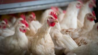 Die Massentierhaltungsinitiative verlangt ein Ende von «Fleischfabriken» in der Schweiz.