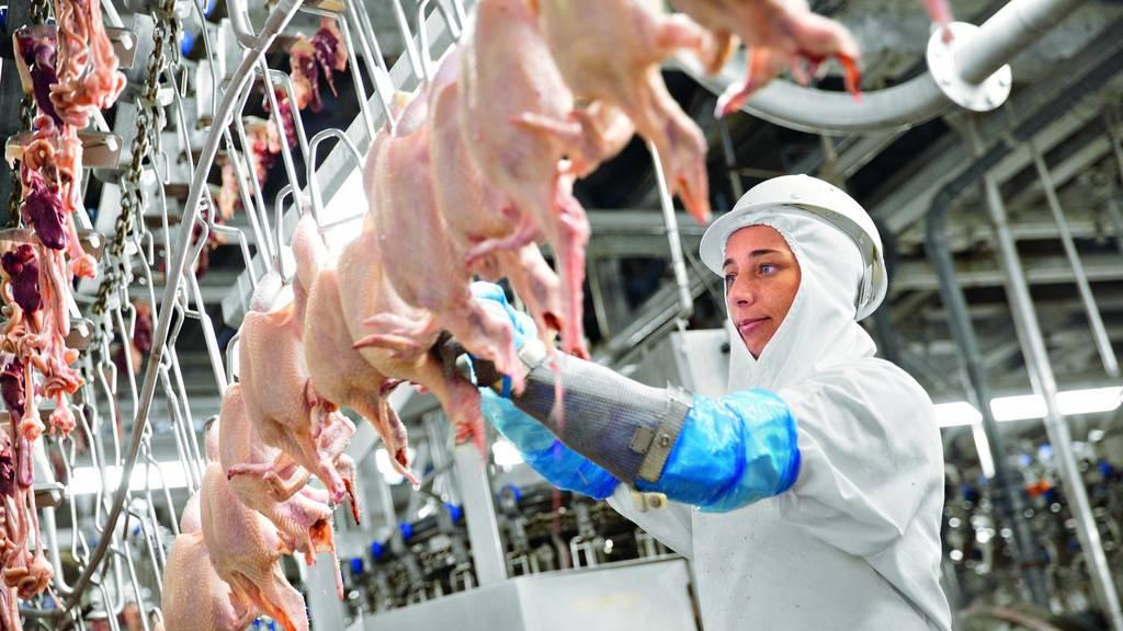 Micarna verzichtet auf weiteren Geflügelschlachthof in der Ostschweiz