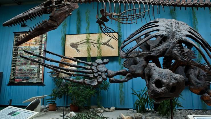 Das Geld fliesst in eine Ausstellung über Meteoriten und das Ende der Dinosaurier. (Archiv)
