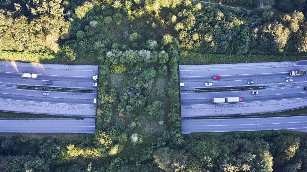 «Freie Bahn für Wildtiere». Das fordert die Organisation Pro Natura in ihrer neuen Kampagne. Bereits erfüllt ist die Forderung hier in Kirchberg BE, wo eine Wildtierbrücke besteht. (Archivbild)