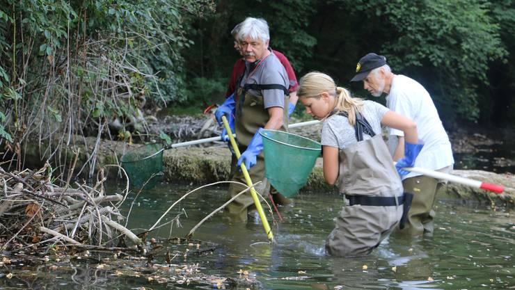 Solchen Szenen vorbeugen: Fischrettungsaktion in der Sissle.