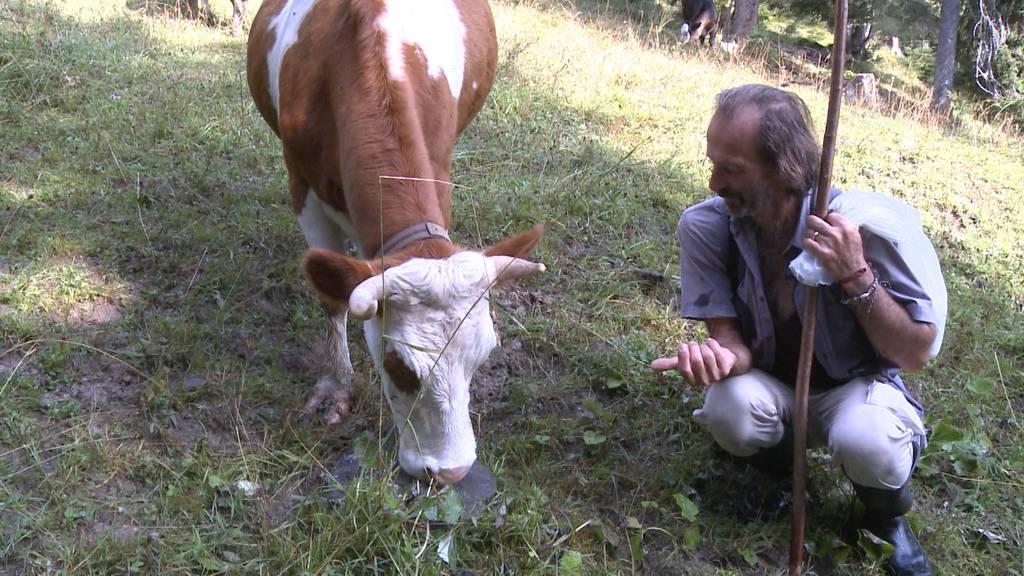 Ferien für Kühe