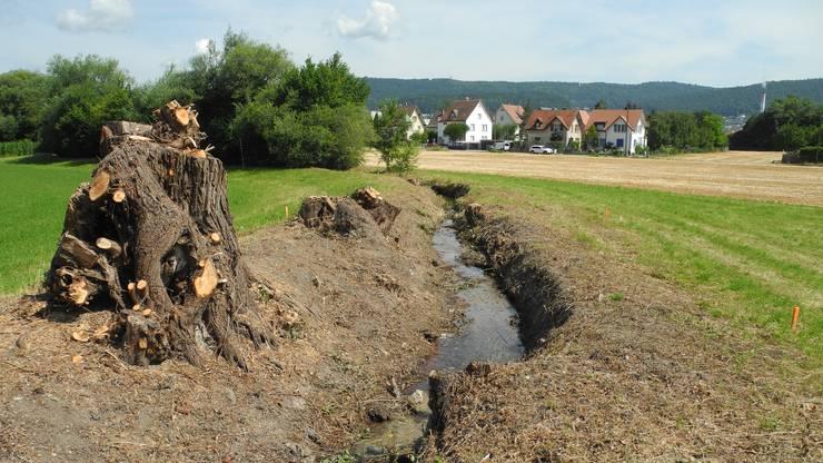 Dabei wurden einige Bäume am Teischlibach entfernt.