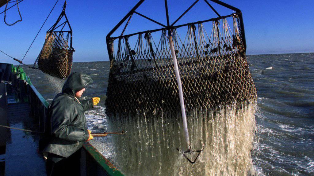 Fischen in der Nordsee: 2017 darf dort mehr Seelachs gefangen werden. (Symbolbild)