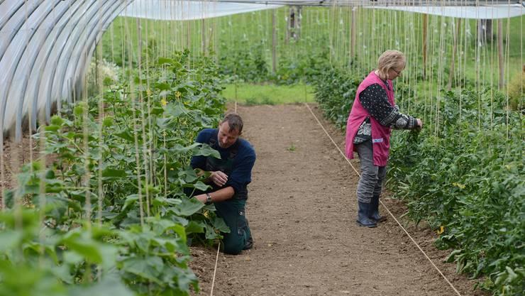 Bauern müssen sich eine Marktnische suchen, sei es die Produktionsweise – im Bild Demeter-Gemüse in Wittinsburg – oder durch Spezialisierung auf ein Produkt. Jun
