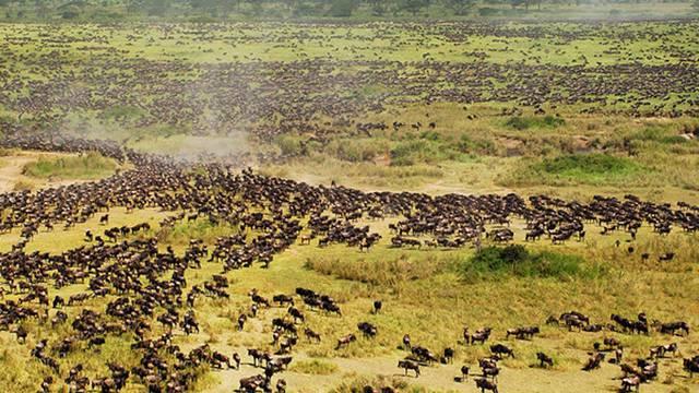 Blick auf einen Teil des Serengeti-Nationalparks (Symbolbild)