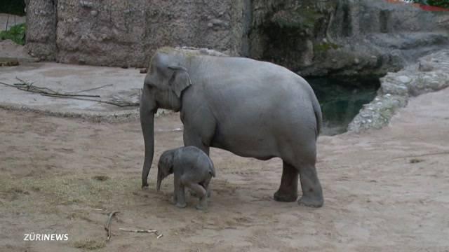 Elefanten-Baby heisst `Ruwani`