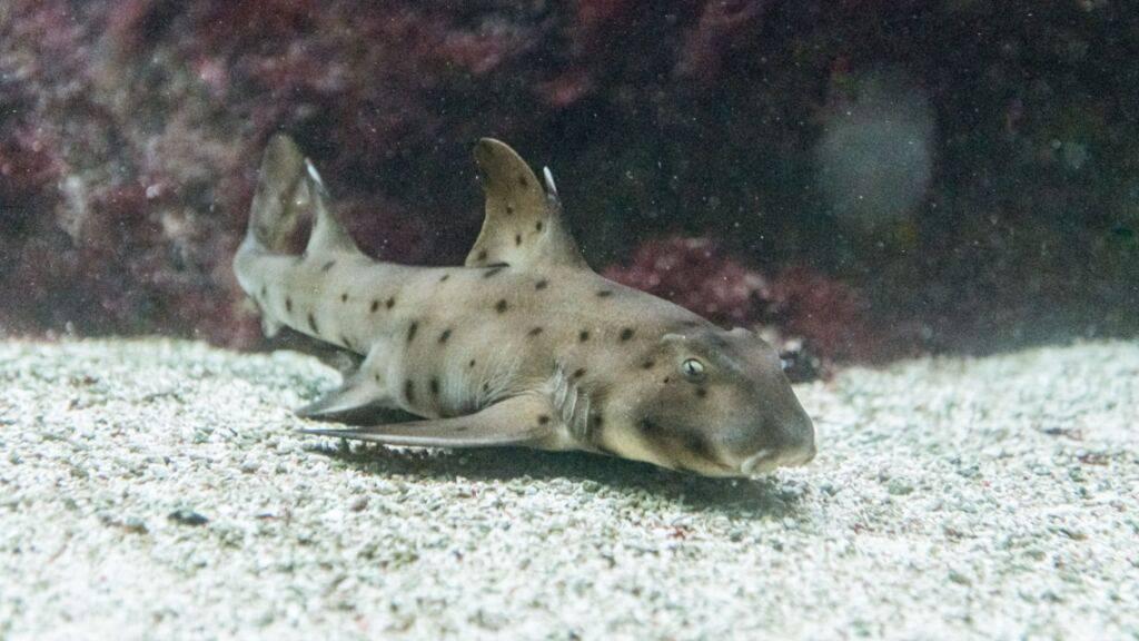 Vater- und mutterlos geborene Haie im Zoo Basel