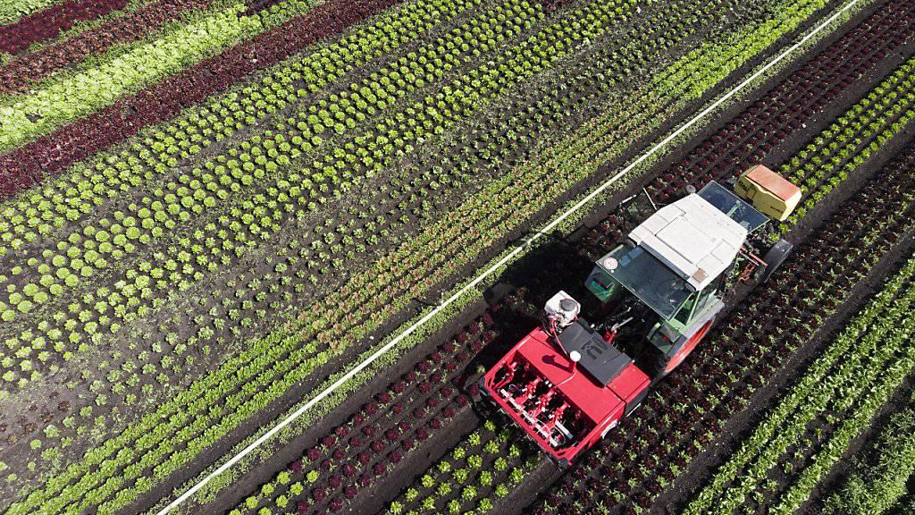 Pflanzenschutzroboter  könnten 40-70 Prozent weniger Pflanzenschutzmittel einsetzen. (Archivbild)