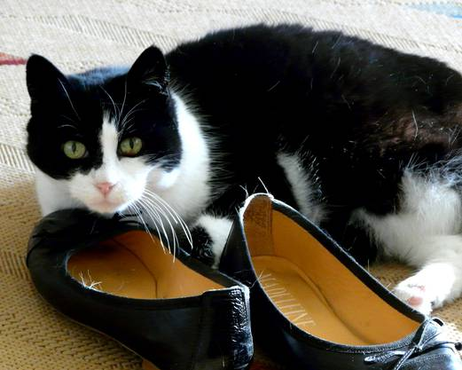 Schuh-Fetischistin...