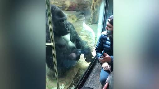 Wer braucht schon Amor? Dieser Gorilla hilft bei der Suche nach grossen Liebe!
