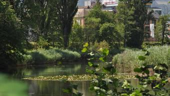Natur trifft auf Gewerbe: Das Flachmoor Schachen in Dietikon grenzt unmittelbar an intensiv genutztes Siedlungsgebiet an.