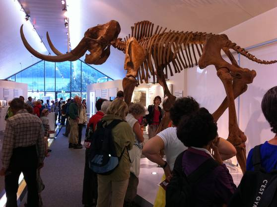 Das Mammut Museum in Niederwenigen