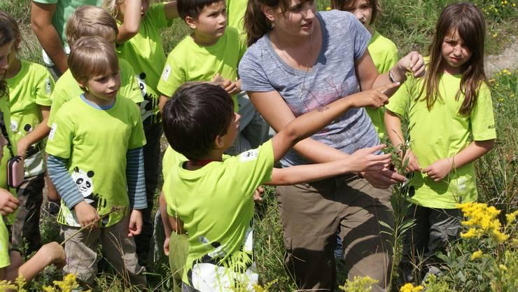 Bevor der Pflückwettkampf los geht, erklärt Dominique Haiden, wie die Pflanzen ausgerissen werden müssen