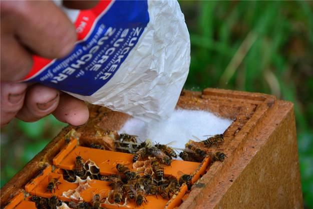 Etwas Nahrung für das kleine Bienenvolk.